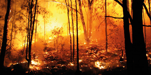 Unseasonal forest fires